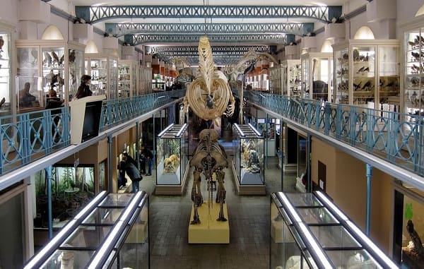 Musee-Histoire-Naturelle-de-Lille