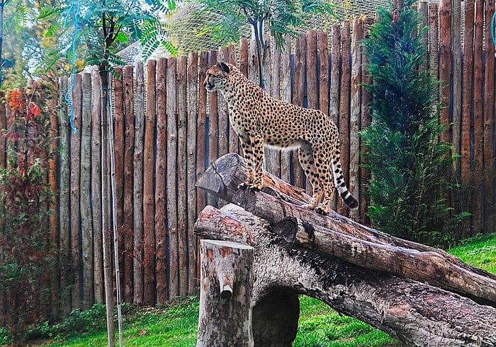 zoologique-de-Lisbonne